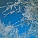 Kobuk slideshow 64-65_0013