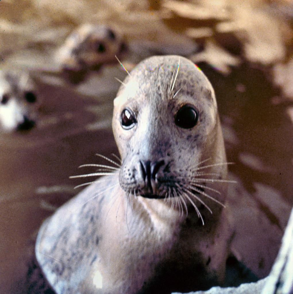 05-Hair-Seal