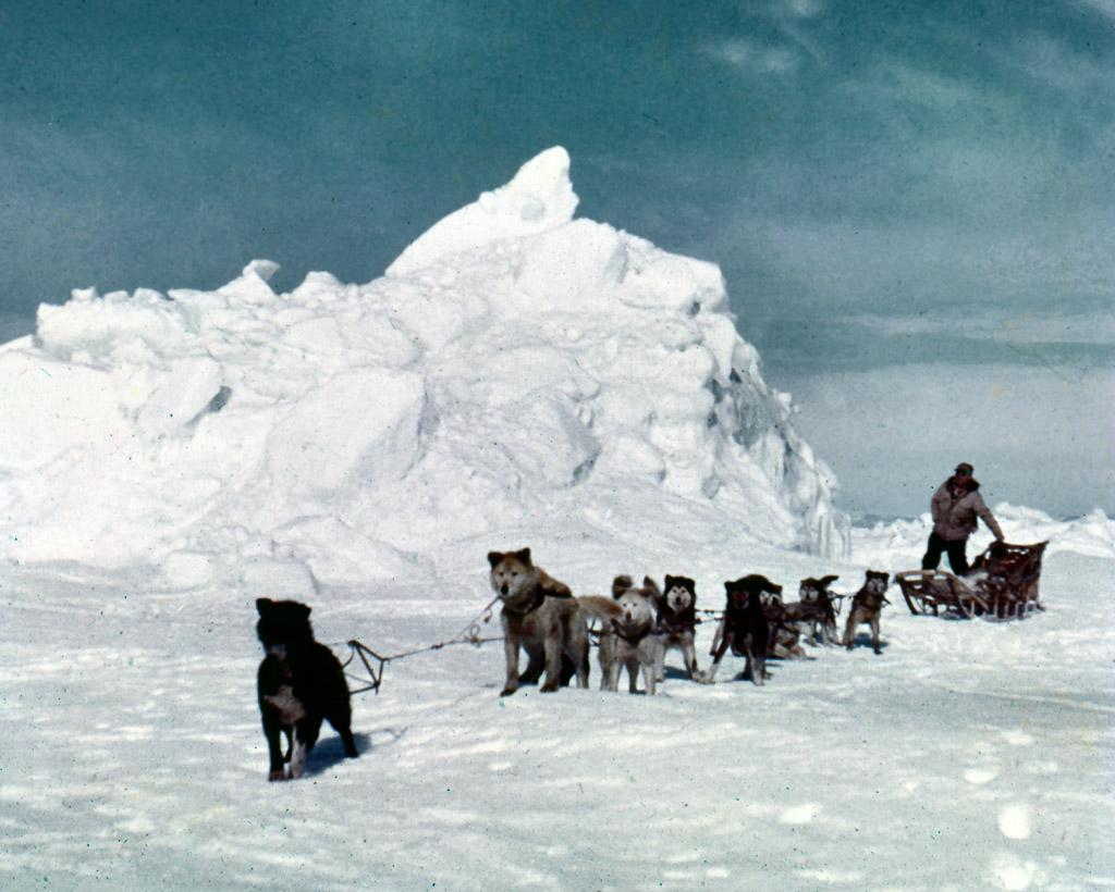 100-Dog-team-travel-on-sea-ice