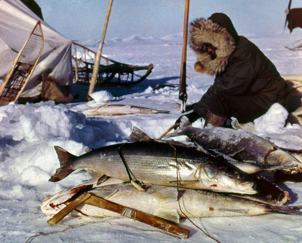 102-Winter-shea-fishing