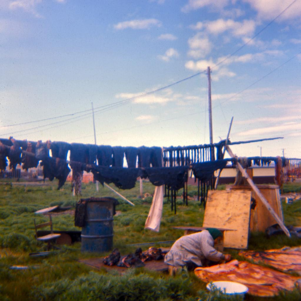 128-Ugruk-meat-drying