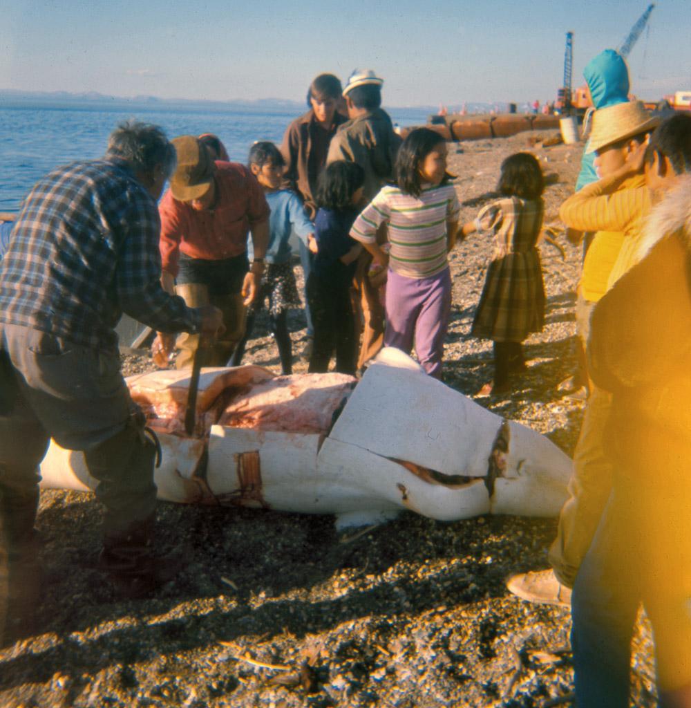 136-Same-Beluga-about-10-P.M