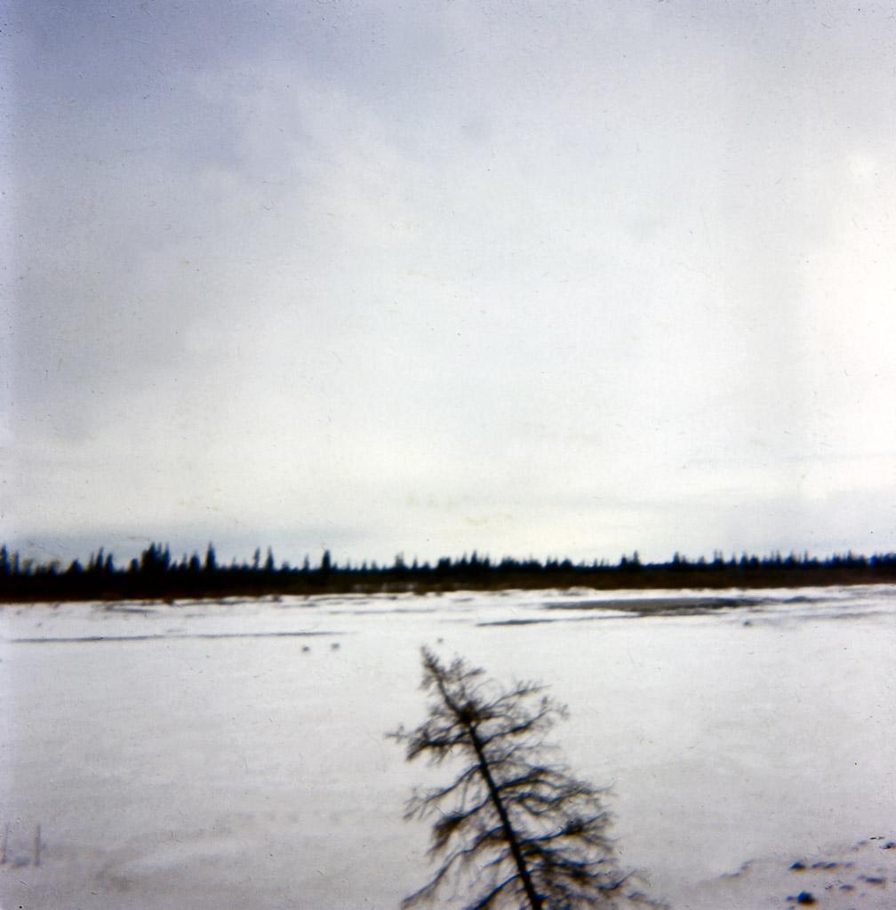 1960s Caribou on the thawing Kobuk River near Ambler.tif