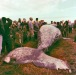 07-Humpback-whale