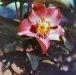 110-Wild-Rose