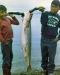 39-Shee-fish