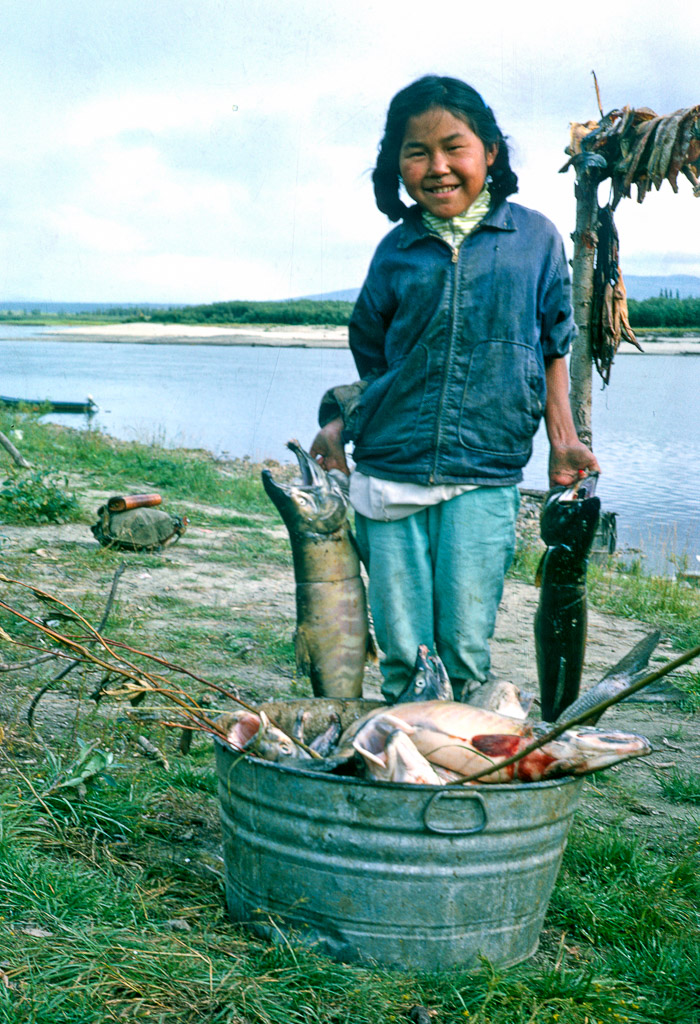 Mabel Cleveland with a mid-summer catch of Chum Salmon. Ambler, Alaska, 1964