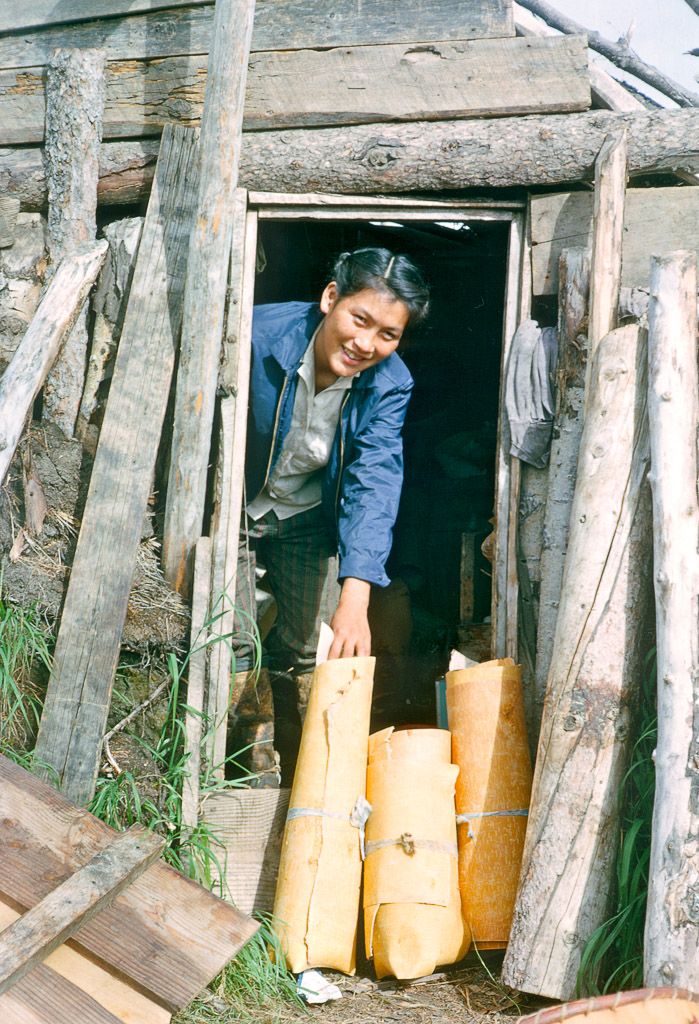 Mamie Cleveland with gathered birch bark for basket making.  Ambler, Alaska 1964.