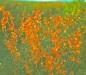 Kobuk slideshow  64-65_0010