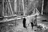 1978 Moose Hide