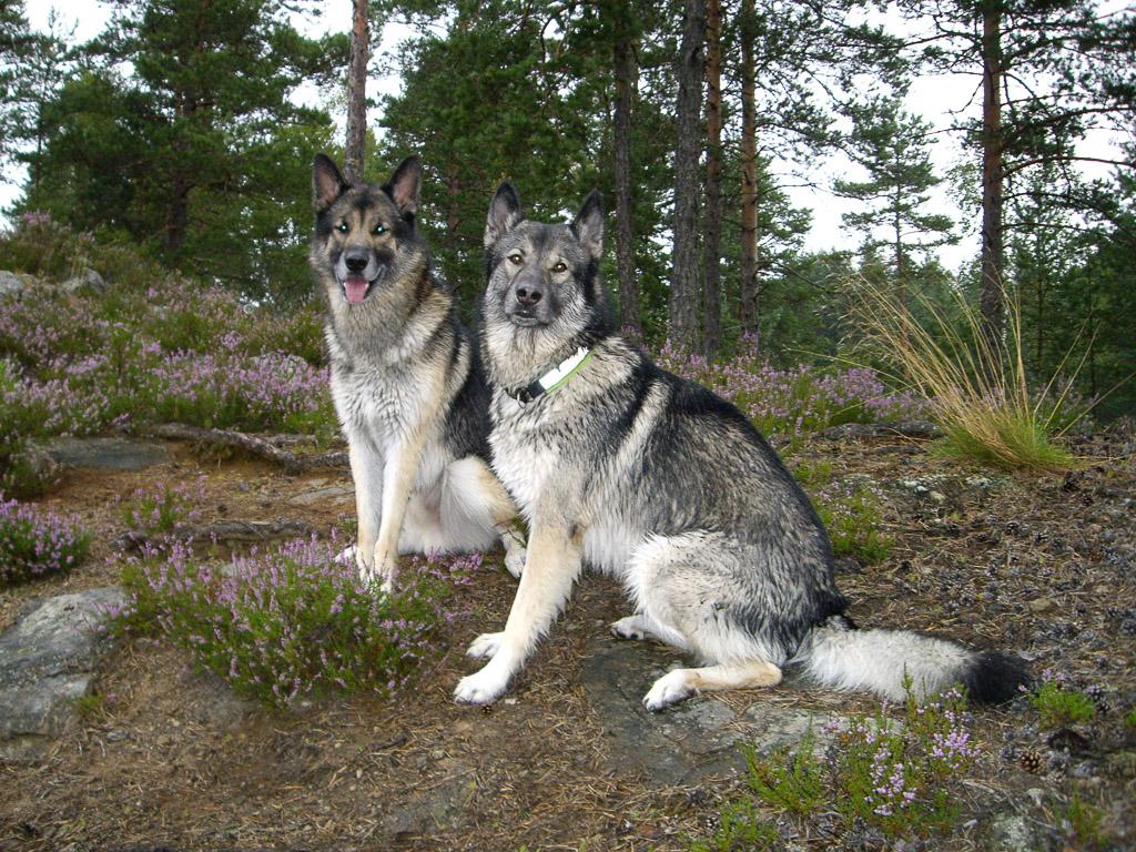 Leirbilder_for_intern_Egon_HundeneLouisa_i_Sverige_Mammie_012