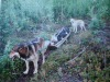 2008_02270192 Oliver's two dogs and sled at Dead Fish Lake