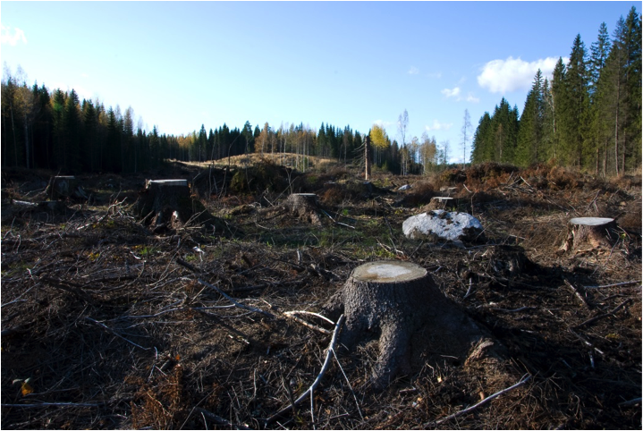 http://upload.wikimedia.org/wikipedia/commons/0/04/Clearcutting_in_Southern_Finland.jpg